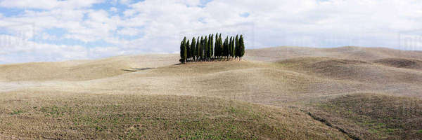Cypress trees in middle of rolling landscape, San Quirici D'Orcia, Tuscany, Italy Royalty-free stock photo