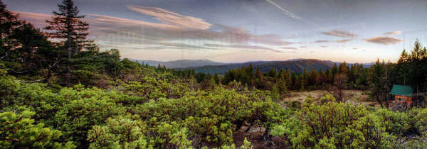 Panoramic view of forest treetops at sunset Royalty-free stock photo