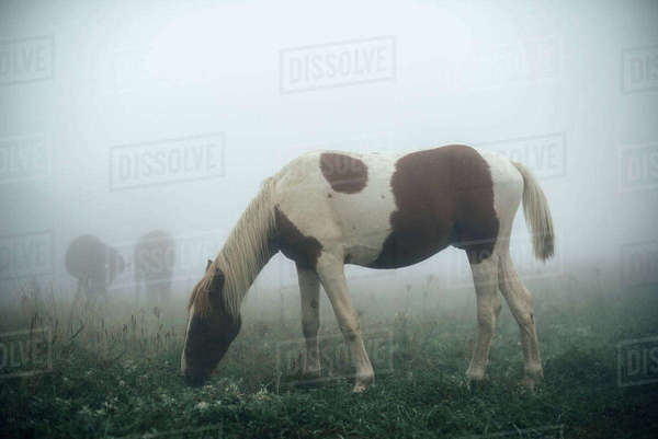 Horse grazing in foggy pasture Royalty-free stock photo