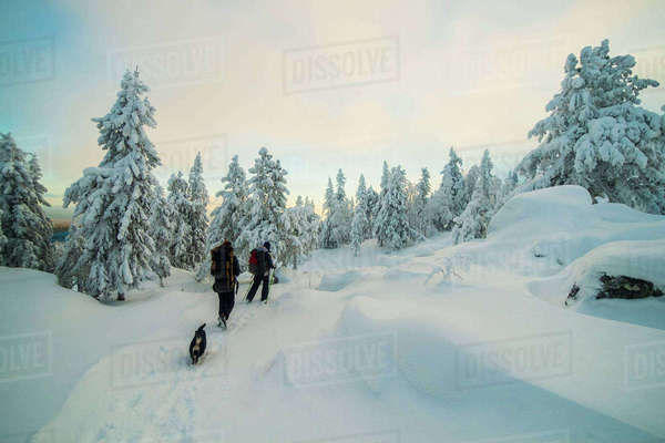 Men hiking in snowy forest with dog Royalty-free stock photo