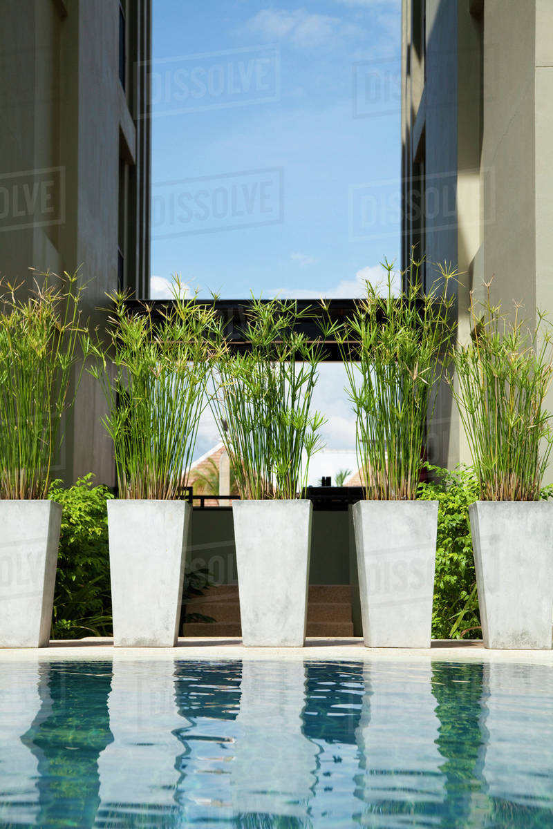 Potted Plants By Swimming Pool