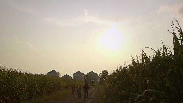 Family walking between crops at dusk Royalty-free stock video