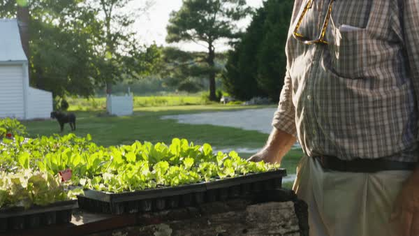 Hand-held shot of an elderly farmer standing next to a table full of potted plants Royalty-free stock video