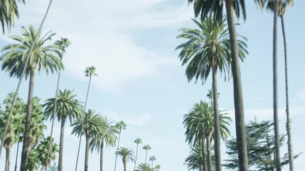 Low angle view of palm trees against blue sky Royalty-free stock video