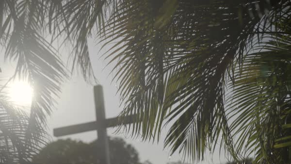 Hand-held shot of palm branches with a Christian cross in background Royalty-free stock video
