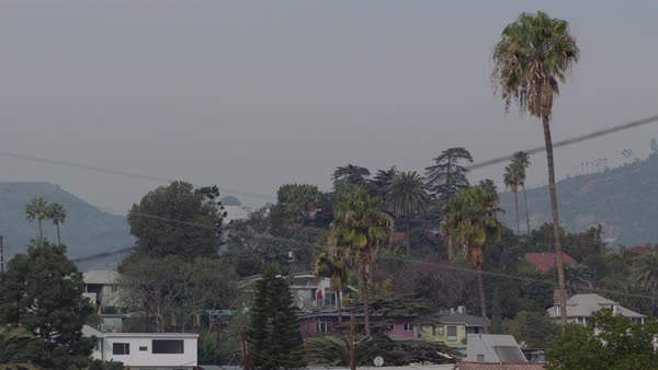 Static shot of houses surrounded by trees, sky in background, Los Angeles, California, United States of America Royalty-free stock video