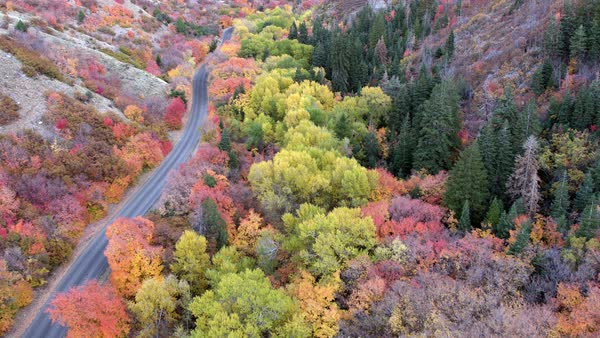 Aerial view moving up canyon looking down at colorful trees flying parallel to winding road. Royalty-free stock video