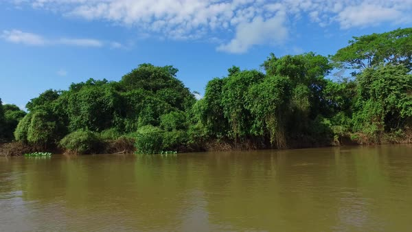 Wide River with jungle on left side Royalty-free stock video