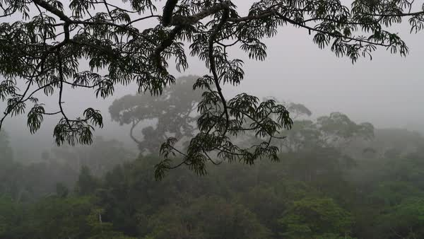 Misty rainforest from canopy top Royalty-free stock video