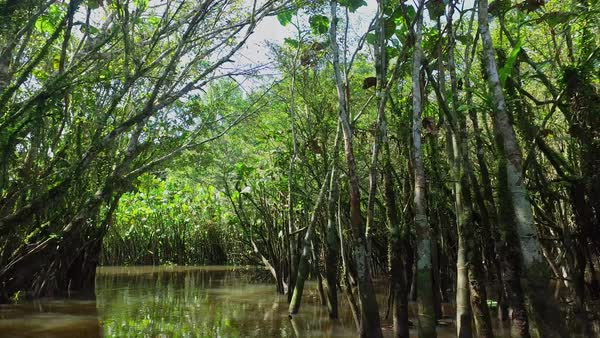 Canoe through flooded jungle forest Royalty-free stock video