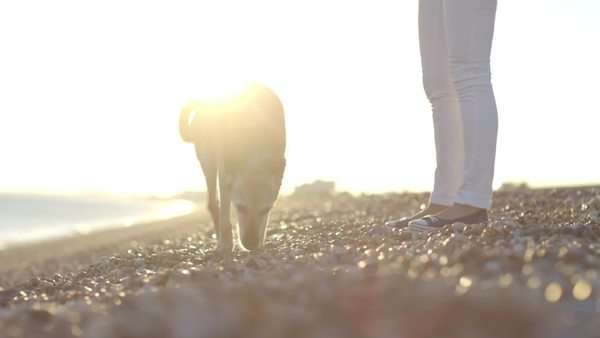 Retired Senior Female walking on beach with dogs Royalty-free stock video