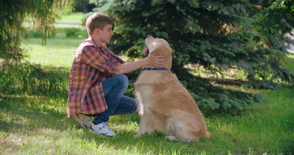 Loving owner petting and scratching his satisfied golden retriever and adjusting a collar  Royalty-free stock video