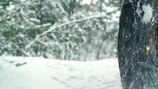 Cheerful little girl hiding behind a tree trunk during snowball fight Royalty-free stock video