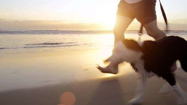 Happy man running dog on beach Royalty-free stock video