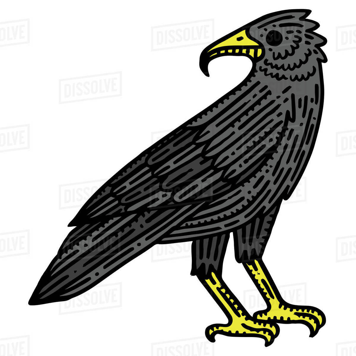 Illustration of a crow isolated on white background Royalty-free stock photo