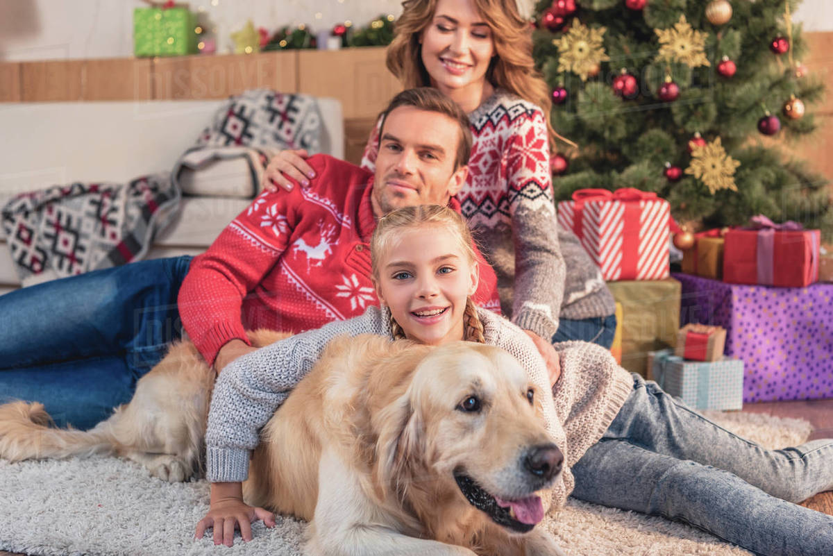 Happy family with golden retriever dog lying near christmas tree at home  stock photo