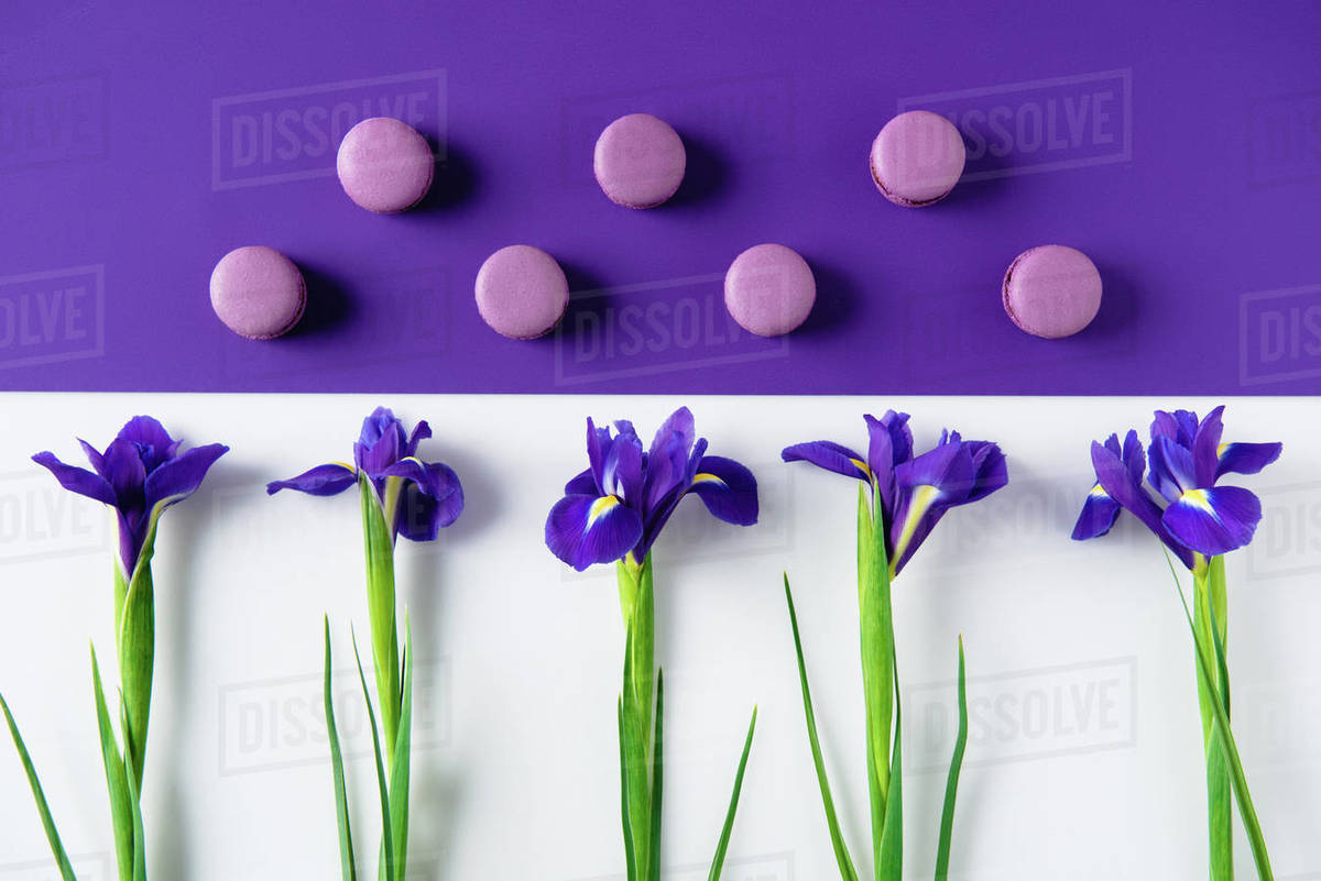 Flat Lay Composition Of Iris Flowers With Delicious Macaron