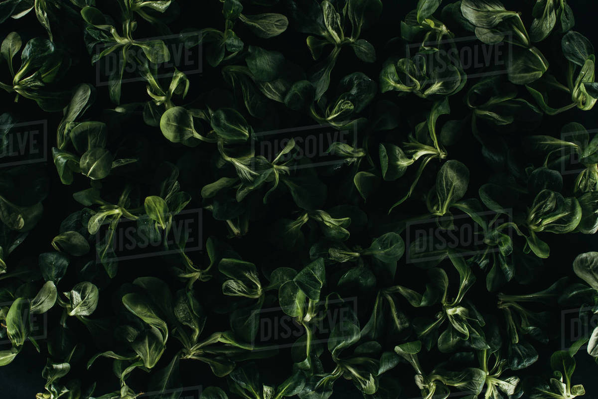 Beautiful Fresh Green Leaves Dark Floral Background Stock Photo