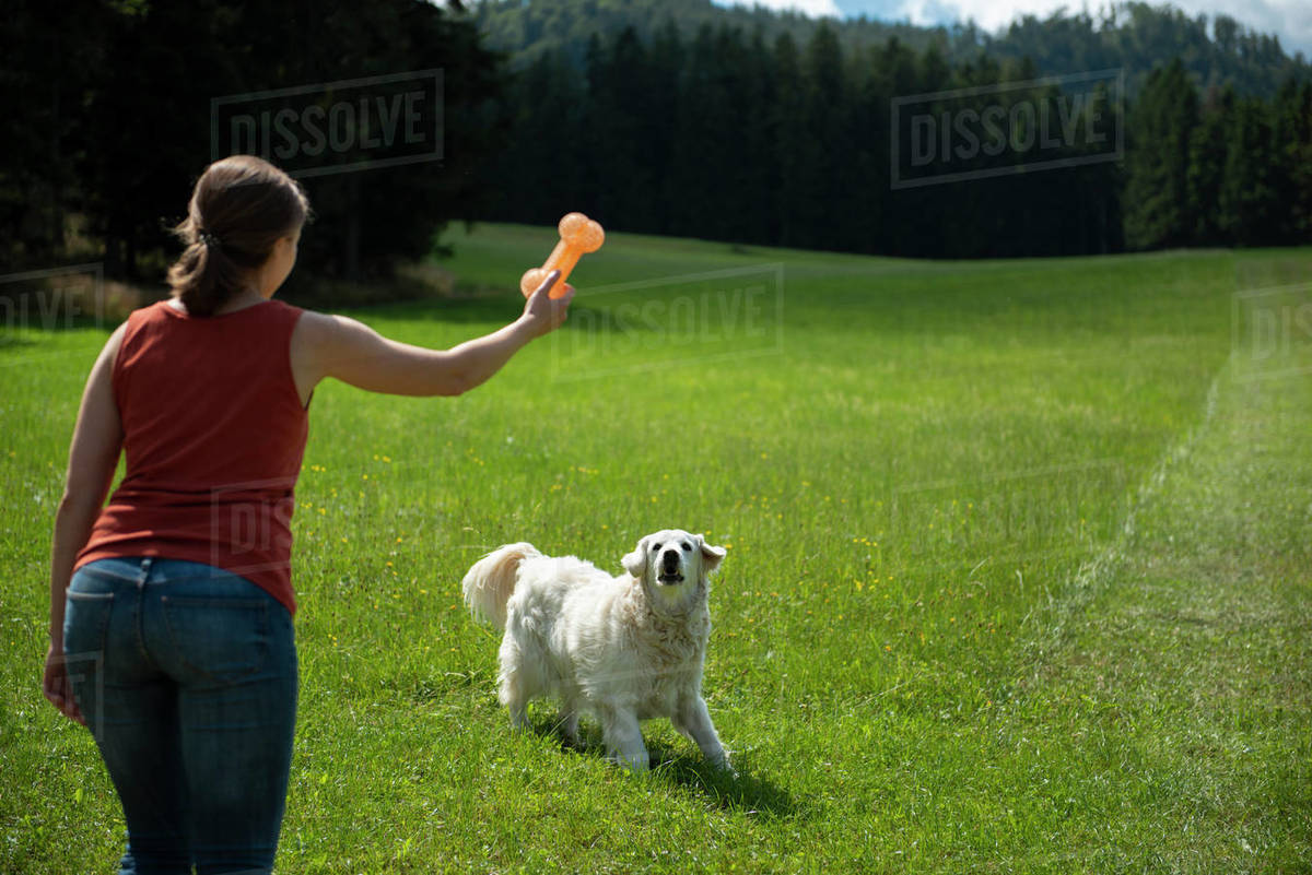 Woman standing in field and throwing a toy for her dog  Royalty-free stock photo