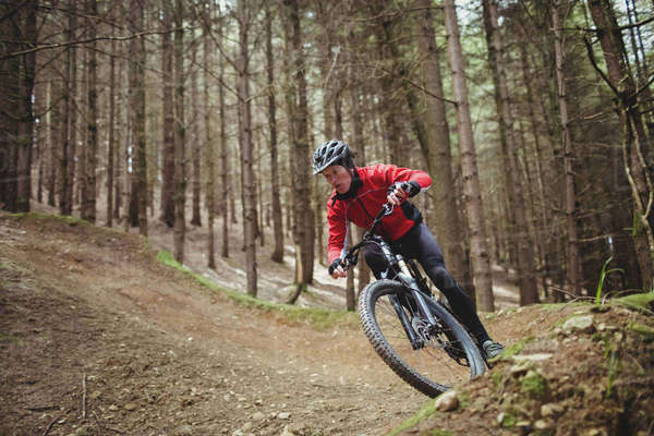 Mountain biker riding on dirt road amidst tree in forest Royalty-free stock photo