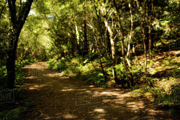Path in a lush green forest Royalty-free stock photo