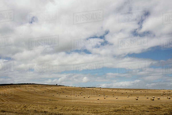 Blue sky over golden fields in the countryside Royalty-free stock photo