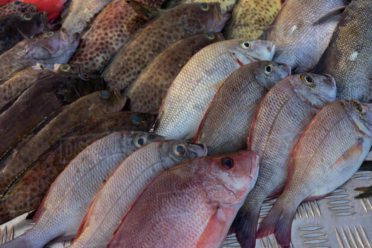 Fresh seafood for sale outside a restaurant on Mirissa Beach, Sri Lanka,  Asia stock photo