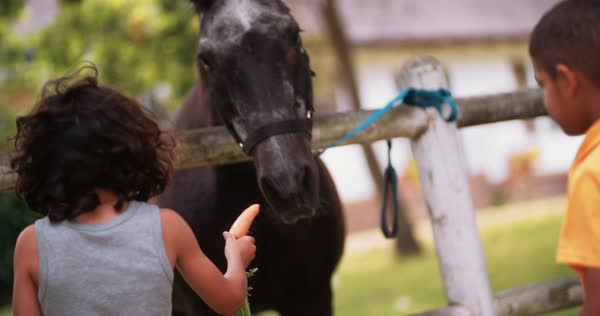 Young hispanic boy with long hair feeding a black horse a carrot through a fence in a park under a big tree Royalty-free stock video