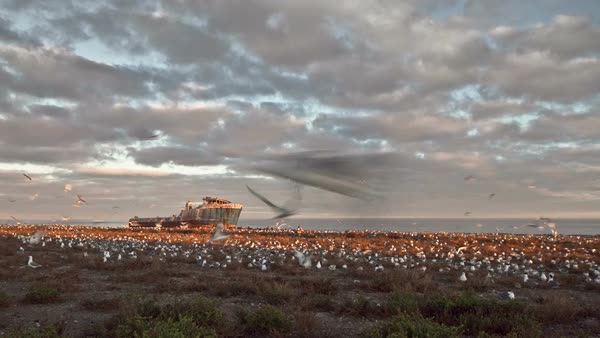 Timelapse showing colony of sea birds with shipwreck in background Royalty-free stock video