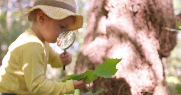 Cute toddler curiously investigating a leaf with a magnifying glass in a park Royalty-free stock video