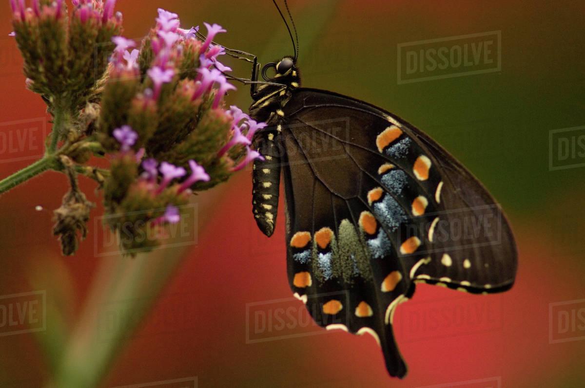 United States, Virginia, Vienna, Meadowlark Botanical Gardens ...