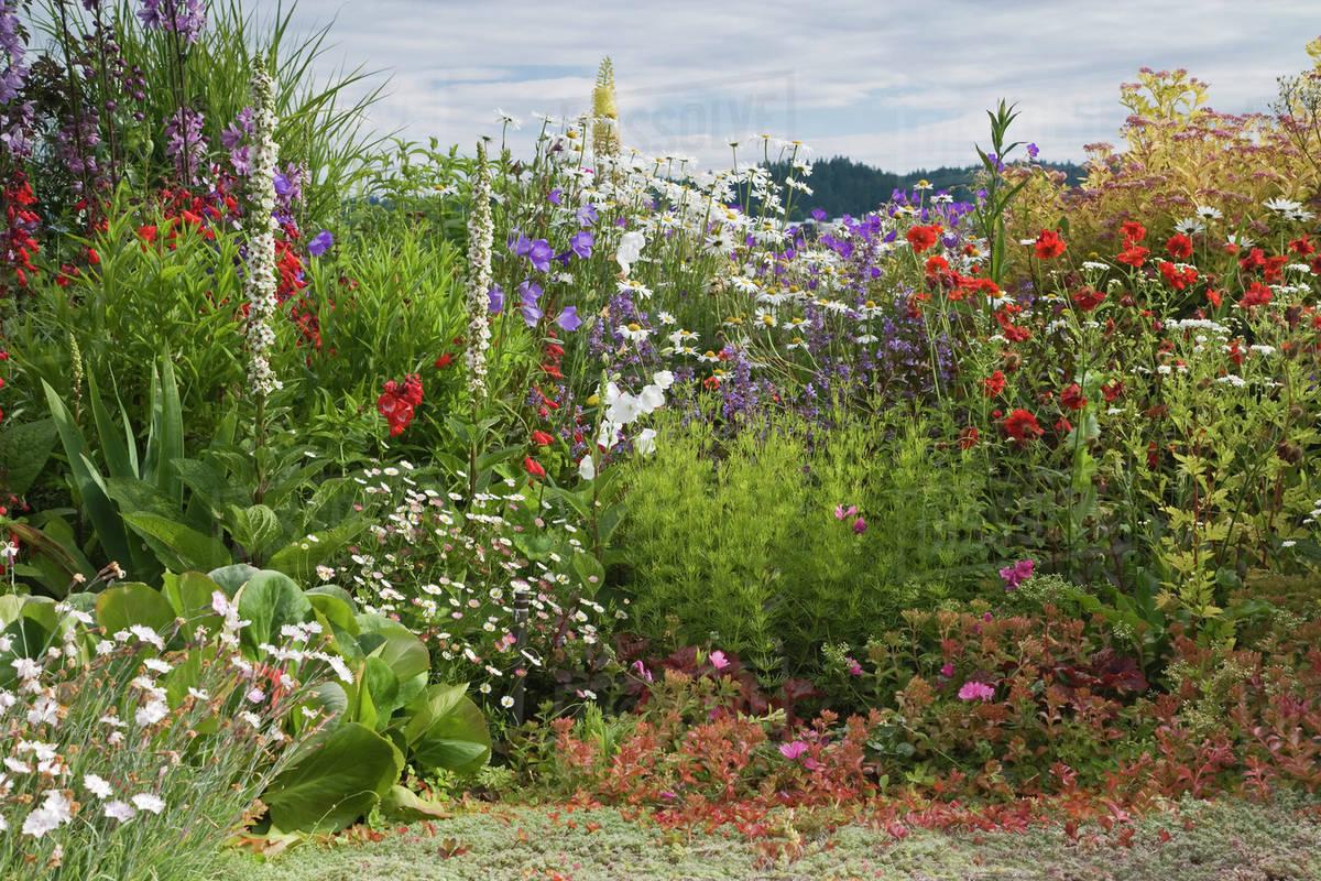 Usa Washington Poulsbo Perennial Garden With Variety Of Flowers