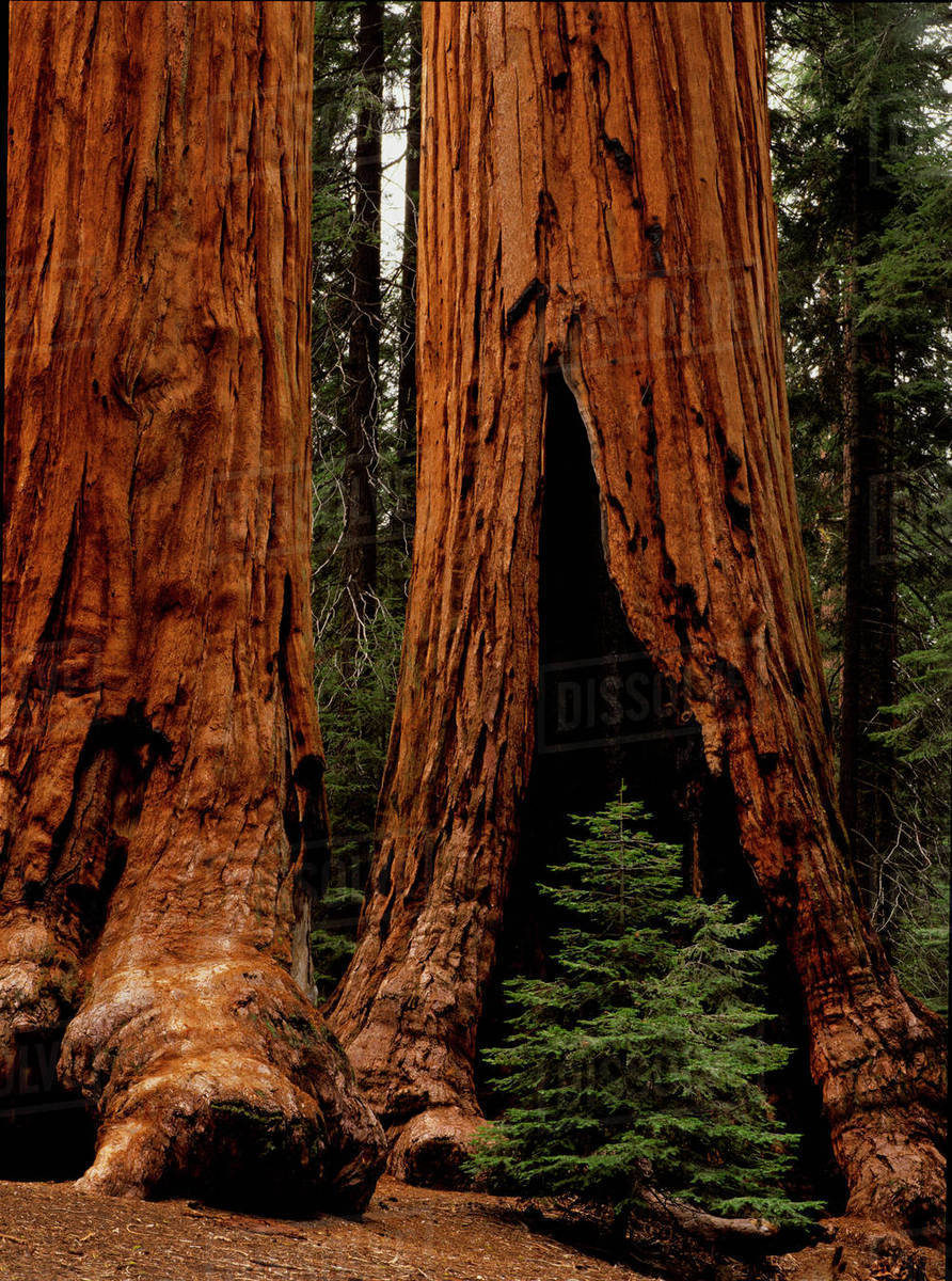 jewish singles in sequoia national park Tauck western usa tours take you to diverse landscapes  singles specials (10) small groups (12)  sequoia national park and his beloved yosemite national park,.