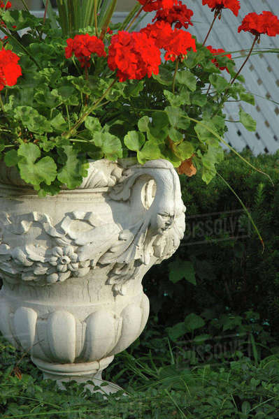 U.S.A., New York, Saratoga Springs, geraniums in urn, historic district Royalty-free stock photo