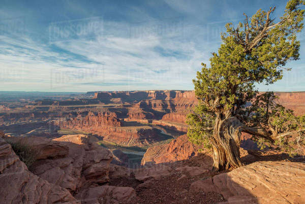 Juniper Tree, Dead Horse Point State Park Royalty-free stock photo