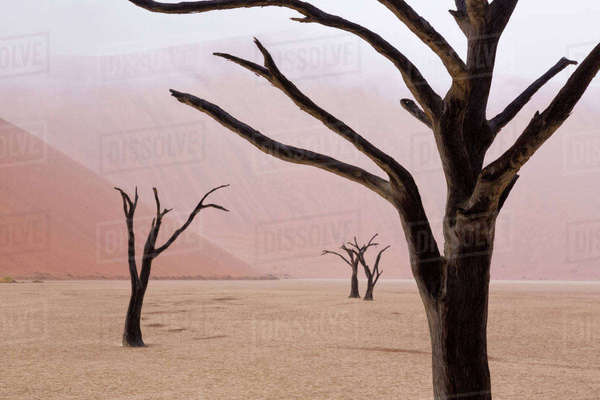 Namibia, Namib-Naukluft Park, Deadvlei. Unusual rainy weather conditions in early morning. Rights-managed stock photo