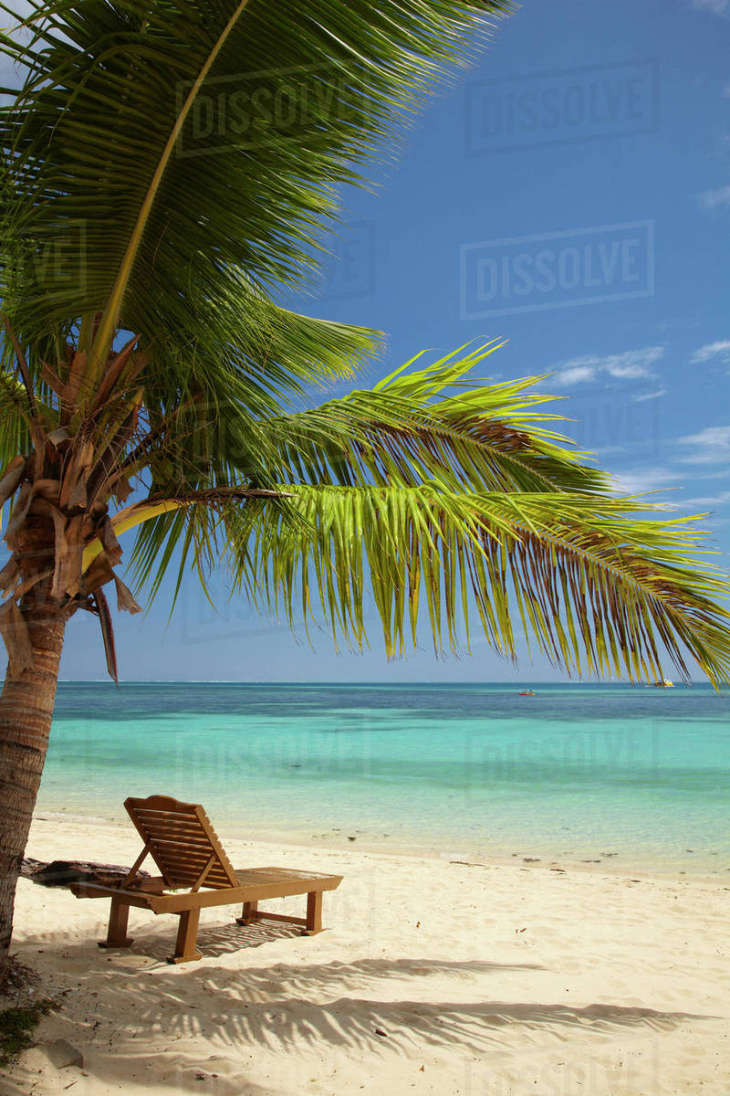 Beach Palm Trees And Lounger Plantation Island Resort Malolo - Palm-tree-furniture-from-pacific-green