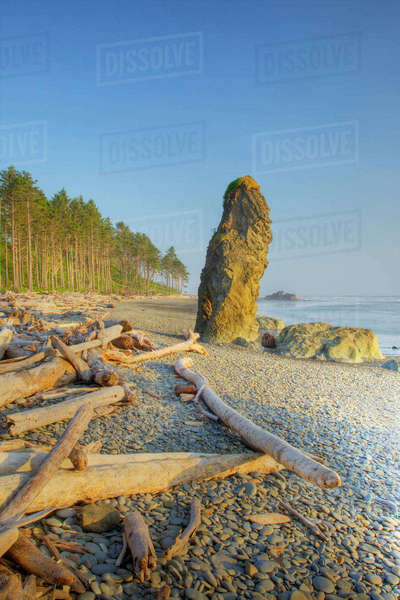Shoreline and Seastacks, Ruby Beach, Olympic National Park, Washington, USA Rights-managed stock photo