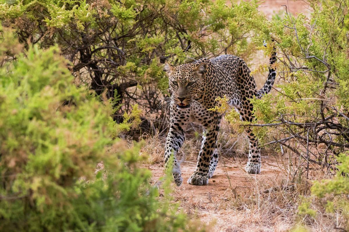 Image result for samburu national reserve