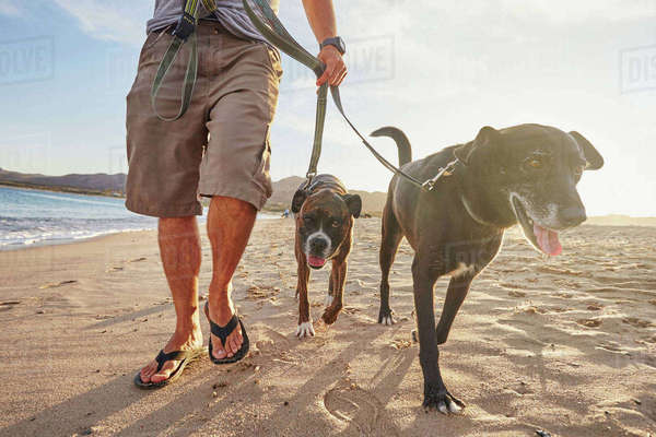 Owner walking dogs on beach Royalty-free stock photo