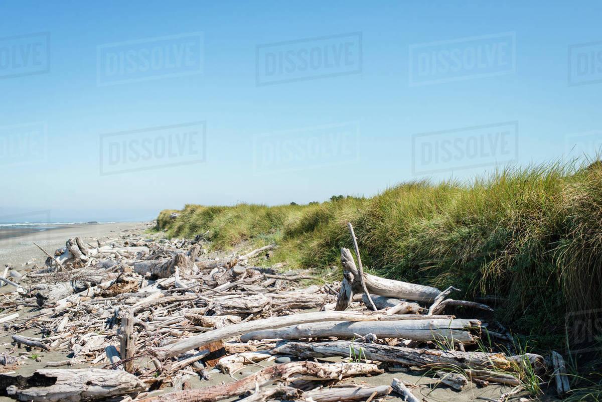 Driftwood Washed As On Beach Oregon Coast Usa