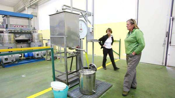 Cold-pressed olive oil flowing from the centrifuge, Umbria, Italy Rights-managed stock video