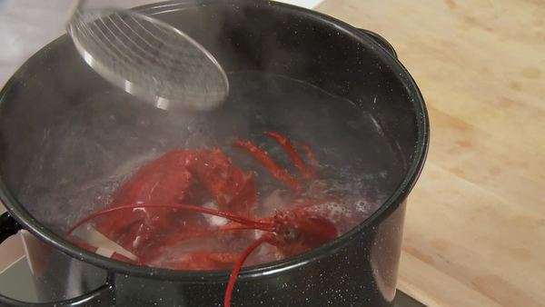 Cooked lobster being removed from the pot Royalty-free stock video