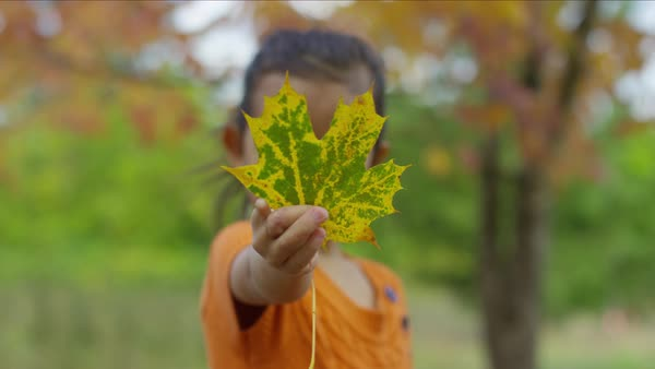 Young girl in Fall holding out leaf Royalty-free stock video