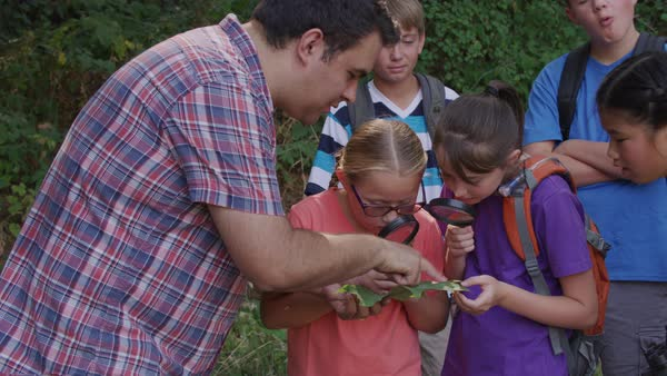 Kids at summer camp looking at leaf with leader Royalty-free stock video