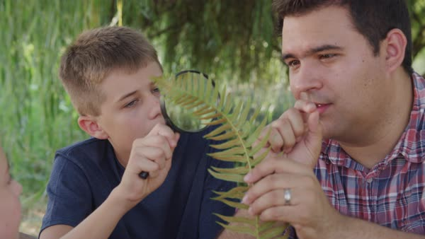 Boy at outdoor school looking at fern with teacher Royalty-free stock video