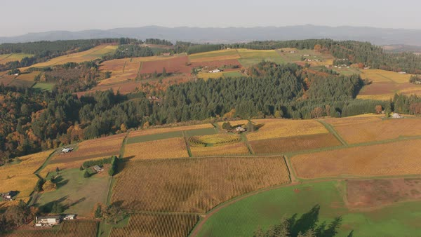 Aerial shot of Oregon's Willamette Valley Wine Country.   Royalty-free stock video
