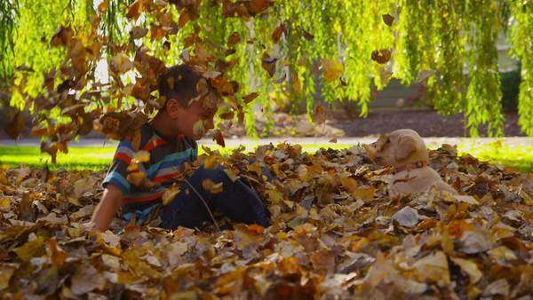 Young boy and puppy playing in fall leaves. Royalty-free stock video