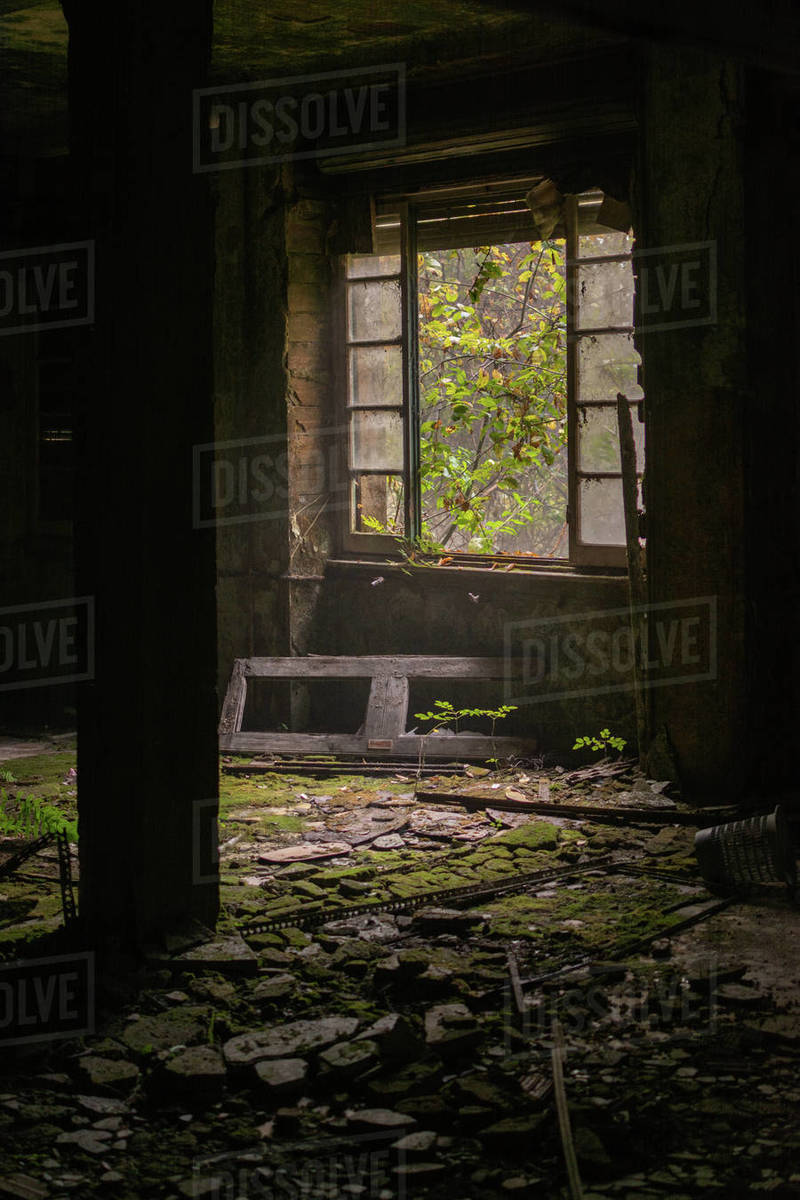 Old abandoned house window with mold and moss on the floor and green wall and plant that grow inside Royalty-free stock photo