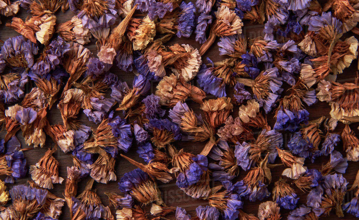 Background of dried flowers Royalty-free stock photo